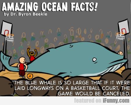 Amazing Oceann Facts!