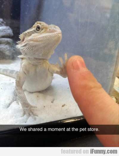 We Shared A Moment At The Pet Store.