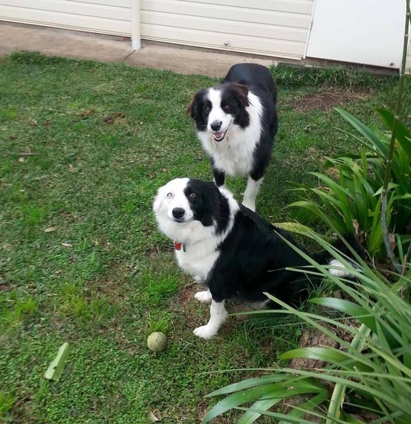 Before the incident, she loved to play fetch and hang out with her best Border Collie friend Remus.