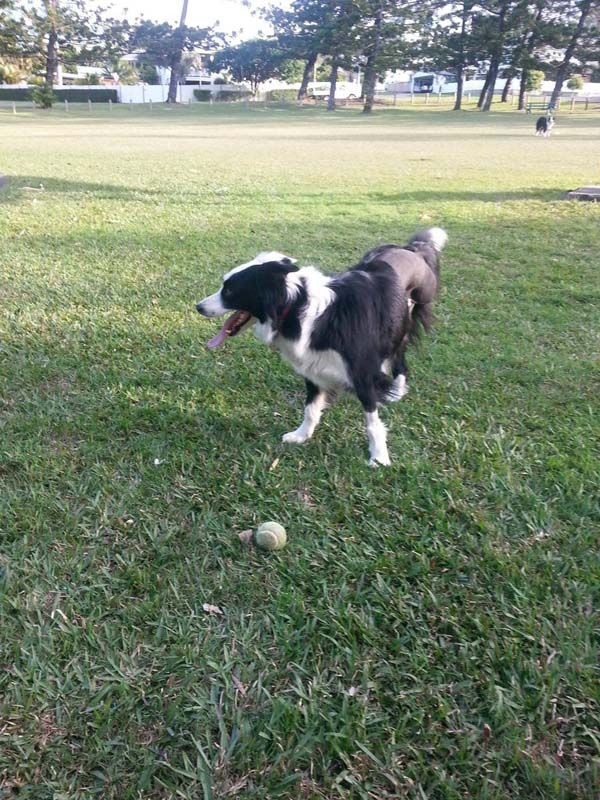 Soon, she was itching to be back outside playing fetch, in her element.