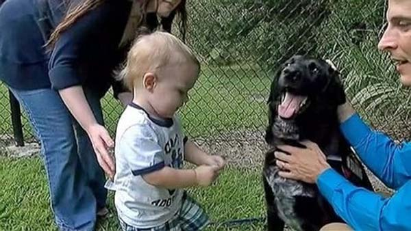 Killian, the family dog, saved little Finn Jordan when he babysitter became abusive.