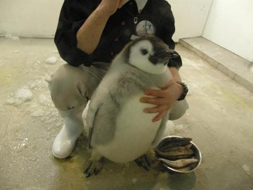 1.) No matter how many times I've seen them, penguins are always the cutest.