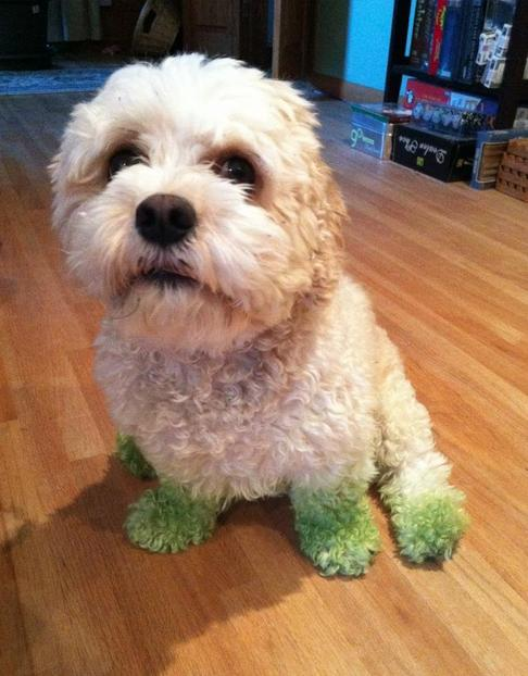 9. I don't understand how my paws get green, but it's always after Dad mows.