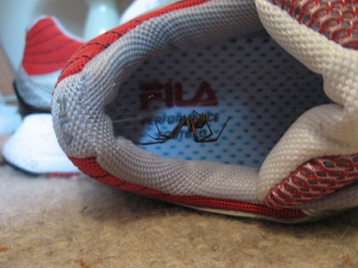 Spidershoephobia:  Fear that a spider has made your shoe his home and feasts on your feet flesh.
