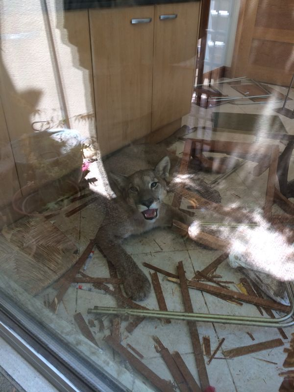 Pumaphobia:  Fear that a puma will break into your house and then break your house.