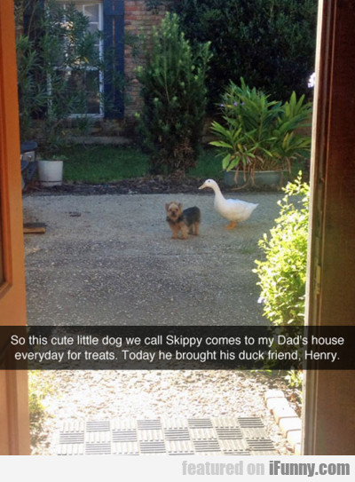 So This Cute Little Dog We Call Skippy Comes To...