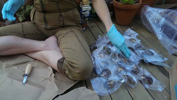 Sarah opened her gift and saw... a big bag of freshly sealed oysters.