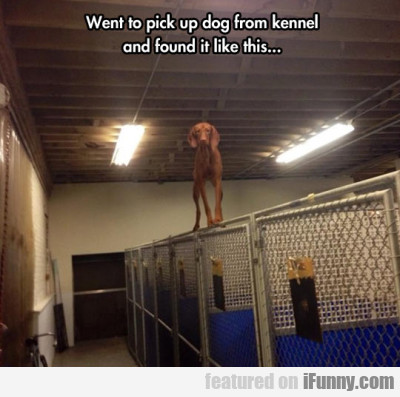 Went To Pick Up Dog From Kennel And Found It...