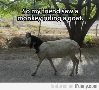 So My Friend Saw A Monkey Riding A Goat
