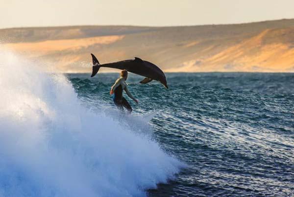 6.) Dolphin: 1, Human: 0