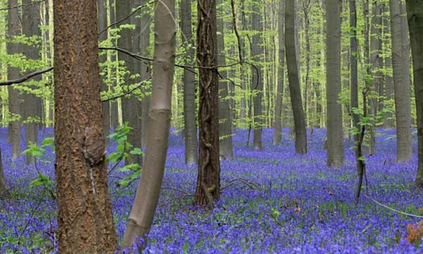 12.) This blue forest is where fairy tales are made.