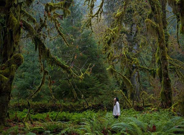 16.) Big forest, little person.