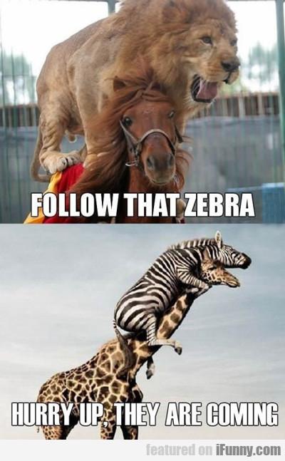 Follow That Zebra...