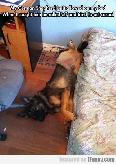 My German Shepherd Isn't Allowed On My Bed..