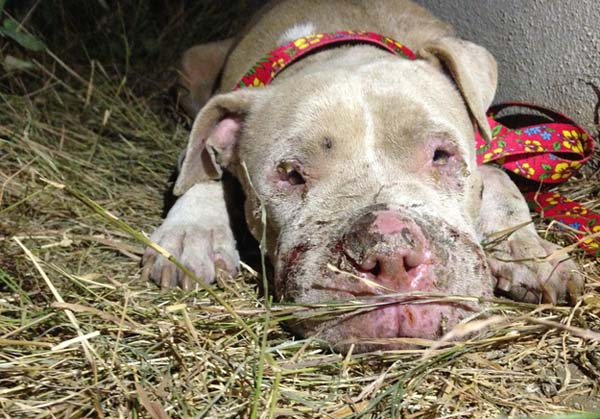 Cadence was found in an alley, badly hurt and collapsed from exhaustion.