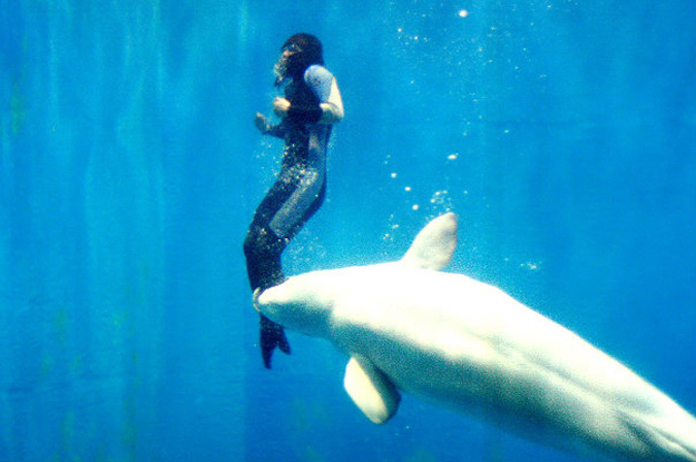 "She said, ""I began to choke and sank even lower and I thought that was it for me – I was dead. Until I felt this incredible force under me driving me to the surface.""  A Beluga whale saw what was happening and lifted her to safety."