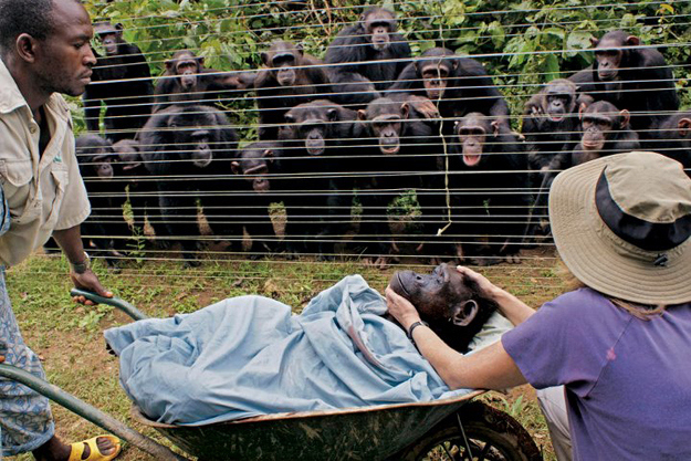3. When Cindy the chimp died of heart failure, all of the other chimps at this rescue in Cameroon hugged each other and watched in solidarity. A truly beautiful, amazing moment.