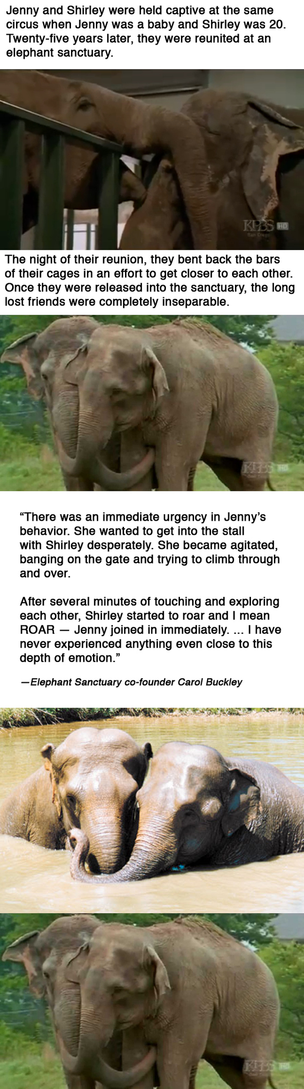 5. These abused circus elephants were reunited 25 years later at an elephant sanctuary. Their story is moving.