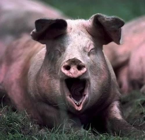 5.) The Piggy Prankster