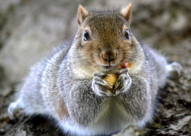 7.) The Martyr Squirrel