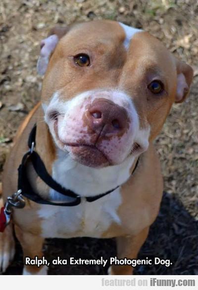 Ralph, Aka Extremly Photogenic Dog