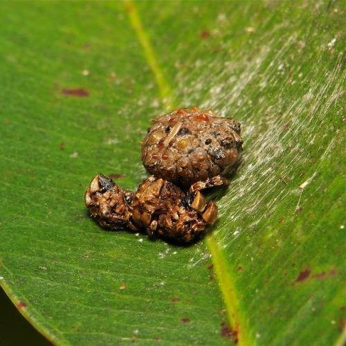 9.) Nah, that's not poop. It's a spider.