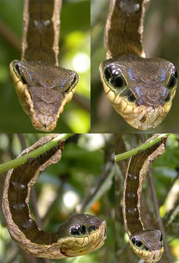 8.) Get a load of this: a caterpillar that looks like a snake.