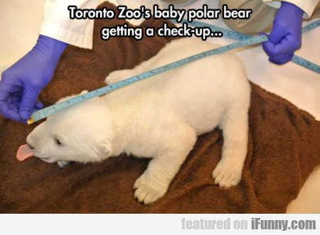 Toronto's Zoo Polar Bear Getting A Check-up