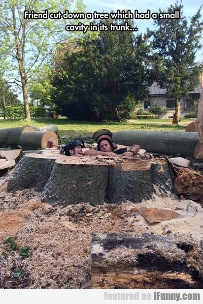 Friend Cut Down A Tree Which Had A Small Cavity...
