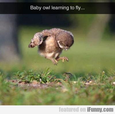 Baby Owl Learning To Fly...