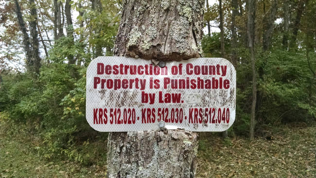This tree that challenges authority.