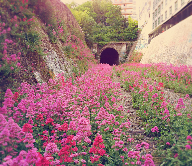 9.) The inner city railway in Paris is abandoned...at least to people.