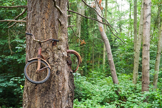 15.) This tree on Vashon Island, Washington just ate a bike. Whoa.