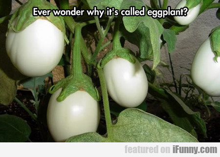 Ever Wonder Why It's Called...