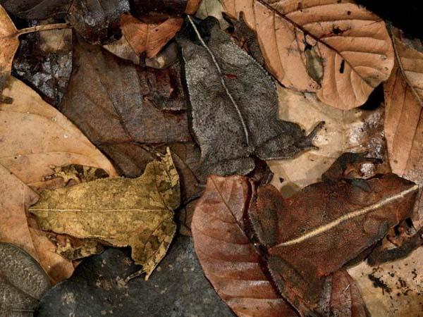 19.) I'm never walking on leaves again.