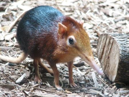 3. Elephant Shrew - Found widely over southern Africa, you'll most likely see them from the Namib Desert to boulder-strewn outcrops in South Africa.