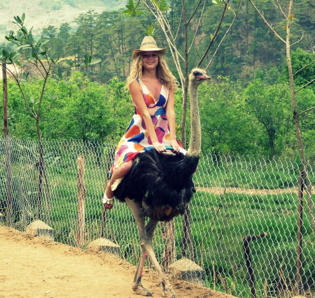1.) Ostrich - Australia, South Africa