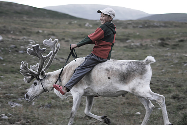 2.) Reindeer - Finland, Mongolia