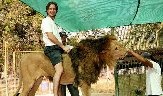 5.) Lion - Argentina