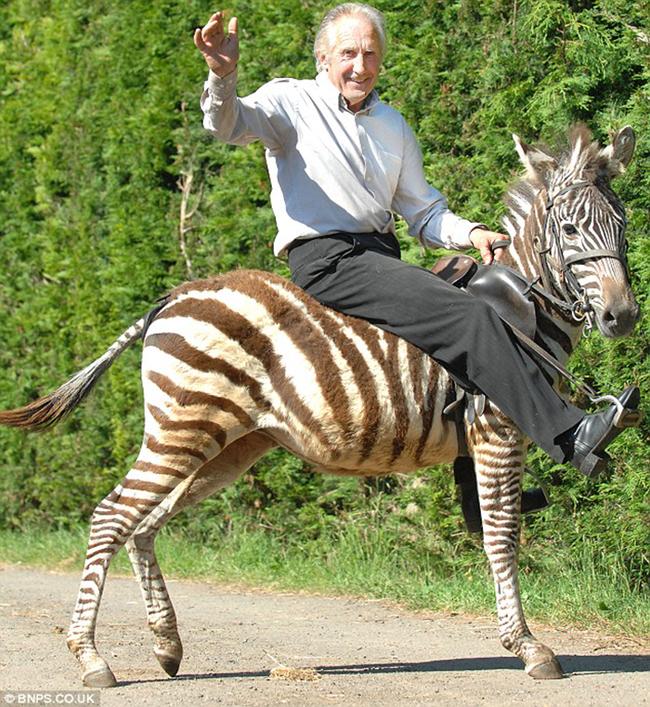 3.) Zebra - China