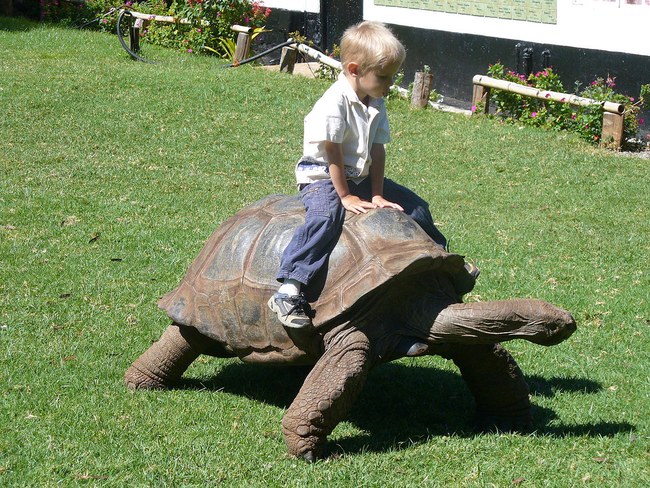 8.) Giant Tortoise - Kenya