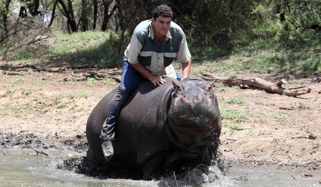 13.) Hippopotamus - South Africa, but nowhere safely