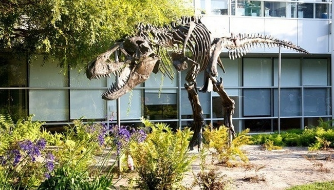 "1.) They have a dinosaur! Yup! A dino's skeleton was found near their building in Mountain View, so  Google has erected a giant t-rex skeleton and named it ""Stan"" in its honor. A powerful name for a powerful hunter."