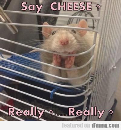 Say Cheese. Really? Really?