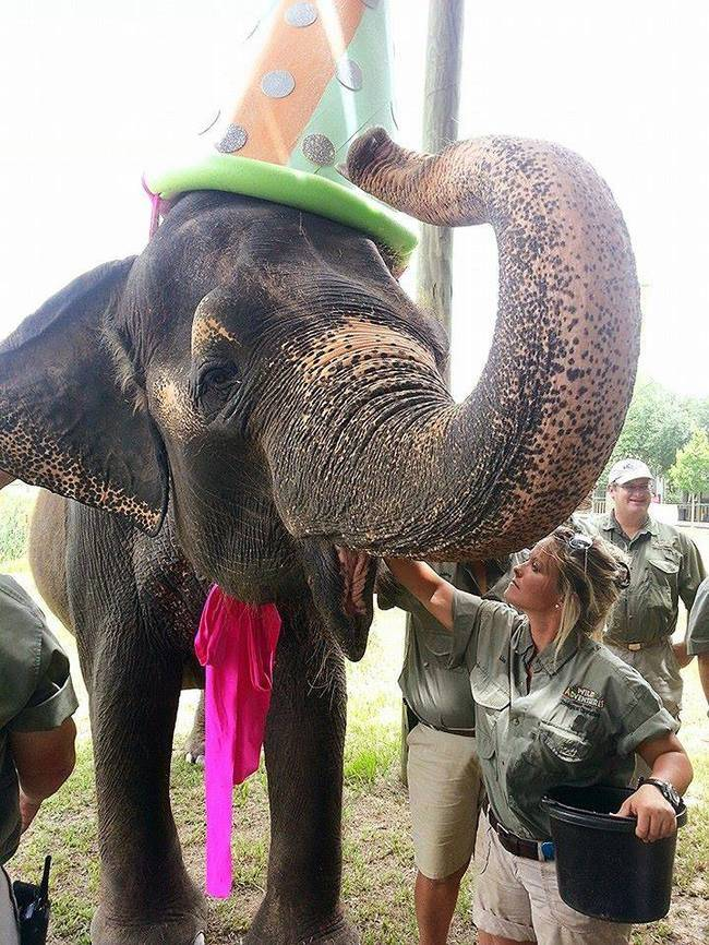 5.) An elephant never forgets...her birthday.