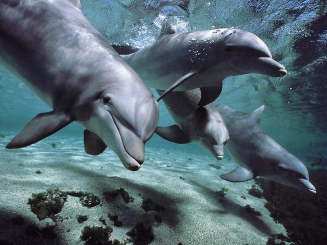 7.) Dolphins know, and have names for each other. It certainly makes dolphin get togethers a lot easier.