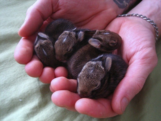 """4.) A """"fluffle"""" is what you call a group of rabbits."""