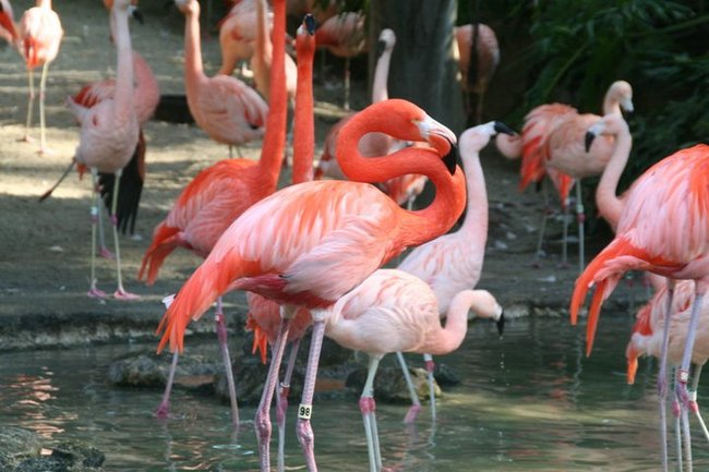 """6.) When flamingoes are hanging out together they're called a """"flamboyance""""."""