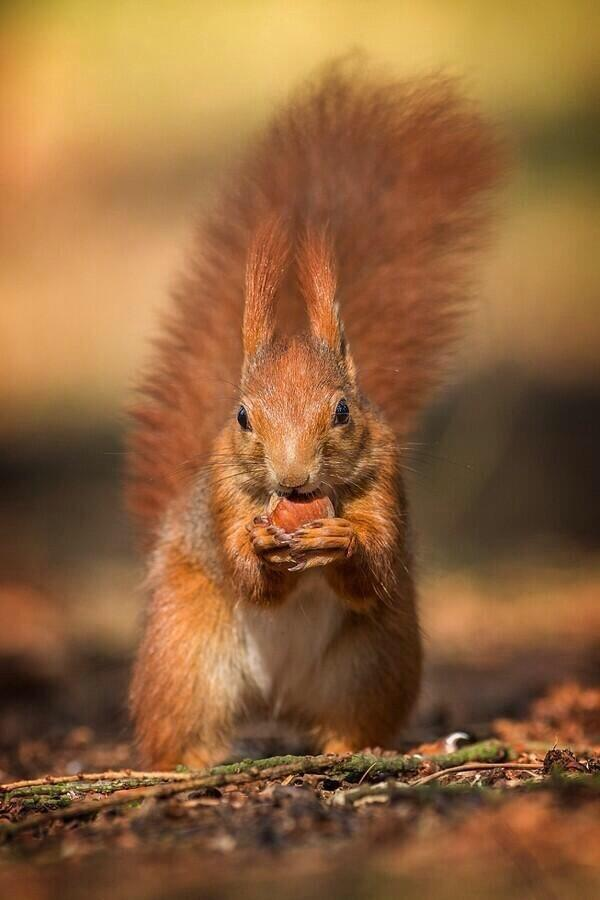 9.) Thank your local squirrels for all those new trees. Hundreds of trees grow every year because of squirrels forgetting where they buried their nuts.