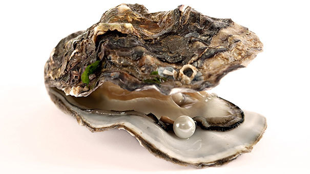 12.) Oysters can change their sex. It just depends on which is more advantageous for mating.